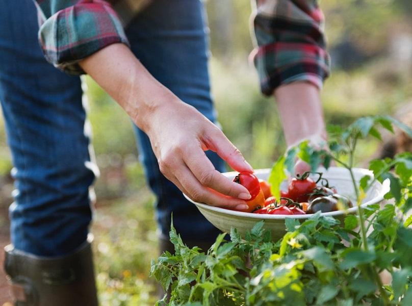 zadruga-savetodavni-centri-za-mlade-poljoprivrednike